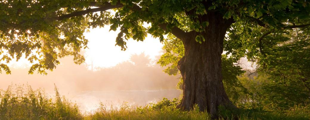 slider-oak